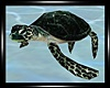 -S- Atlantica Turtle