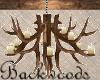 Backwoods Tavern Antlers