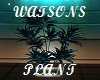 {FE}WATSONS PLANT DECOR
