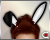 *SC-Black Bunny Ears