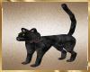 B50 Animated Black Cat