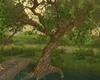 SUMMER TREE (KL)