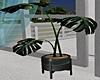 ~PS~ Belize Plant2
