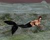 Mermaid Island Bundle