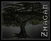 [Z] DA large Tree