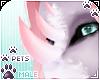 [Pets] Jura | nose horns
