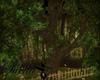 S= tree Botanical