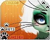 [Pets]Frankie | whiskers