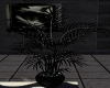 SWN Glittery Black Plant