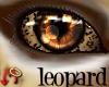 Wild.Eyes Leopard (m)