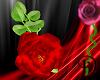 [D] Red Handheld Rose 2
