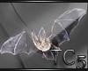 Forgotten bride bats
