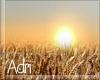~A: Wheat field