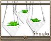 ~S~ Hanging Plants