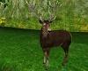 Spring Stag Deer