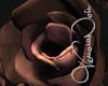 VN MM Roses l