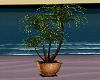 R Gold Plants