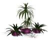 !T! Plant set pink