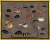 Shells streaming radio