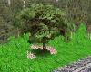 Spring Romantic Tree