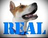 real 3D Dog 144