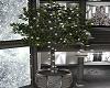 Winter Ficus Tree