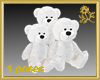 White Teddy Family