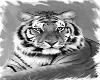 Tiger .231.