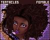 💜 Coco | Hair F 3