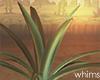 Desert Agave Plant