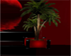 palm in  black red pot