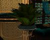Devotion Palm Plant