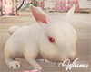 Romantic Spring Bunny