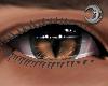 Feline Acorn Eyes M