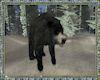⚡ Black Bear