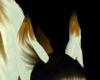 gold&white ears