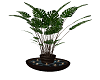 Elegence Plant