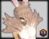 fluff sugar bunny furry