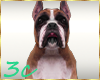 [3c] Boxer Dog Pet