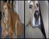 My Dog Face R.I.P Moe