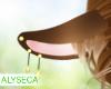 Aly! Yuno ears v3
