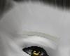 Furry eyebrow