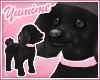 [Y] Pet Poodle ~ Black