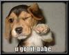 {D}You got it Babe Puppy