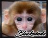 Monkey Bamboo Pic V.2