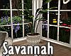 Savannah Summer Plant