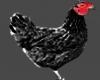 Black Chicken Animatie