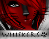 Whiskers :Blk Whiskers