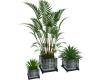 CD Serene Plants Vblue
