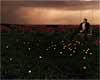 Loves Storm Grass Lights